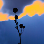 FLORA SERIES #8 ©KEN SHUNG. Color-Close up of bud and stem, silhouetted against a vivid blue and orange sky