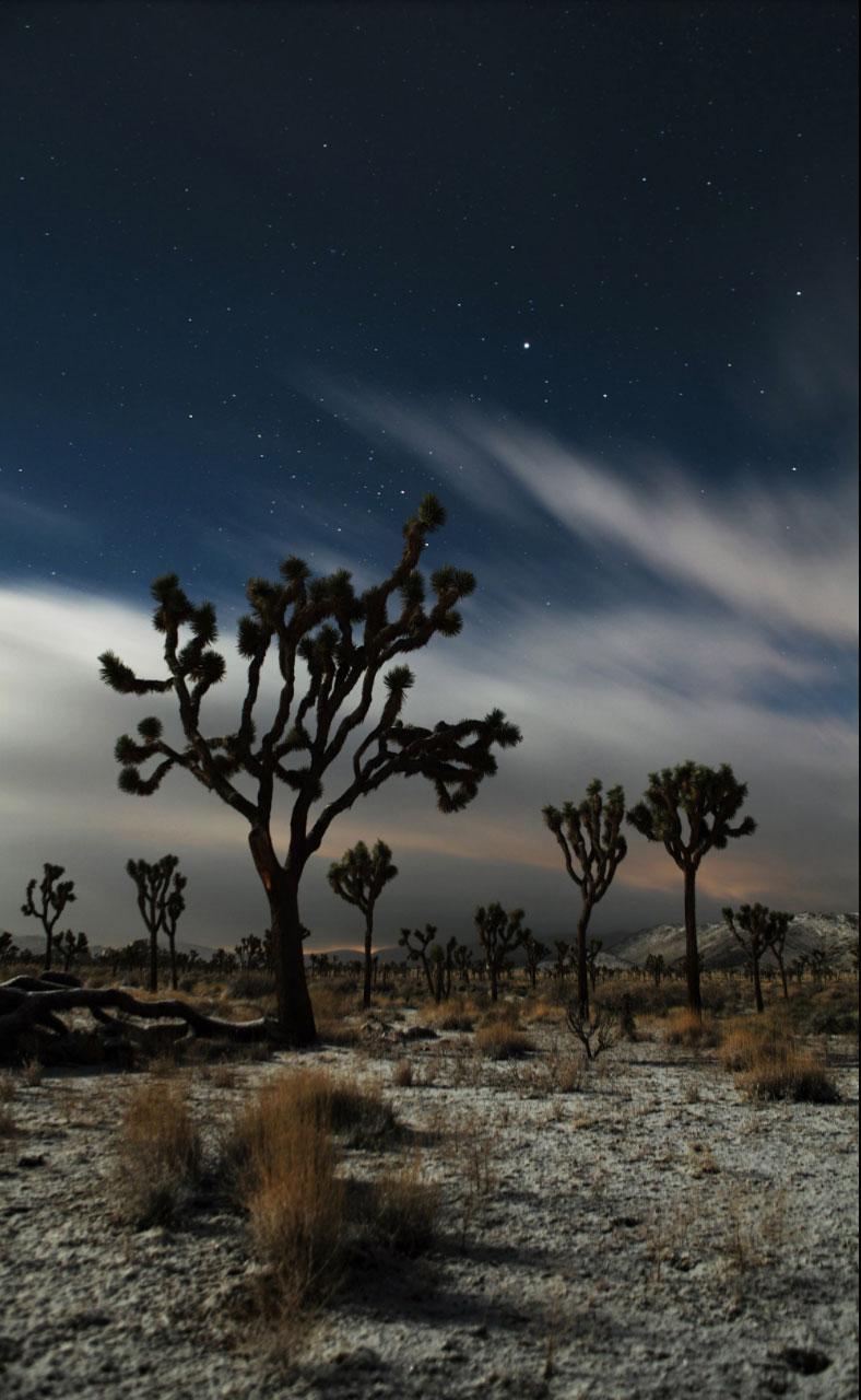 FULL MOON-JOSHUA-TREE ©Oskar Landi as featured in WIRE