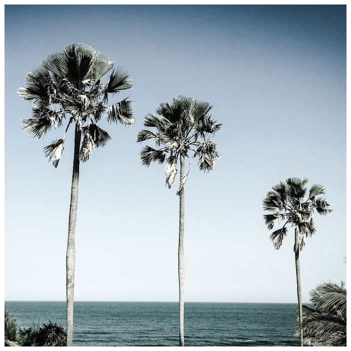 Gift inspiration: 'Three Palm Trees' Gambia - photography print © Helen Jones-Florio