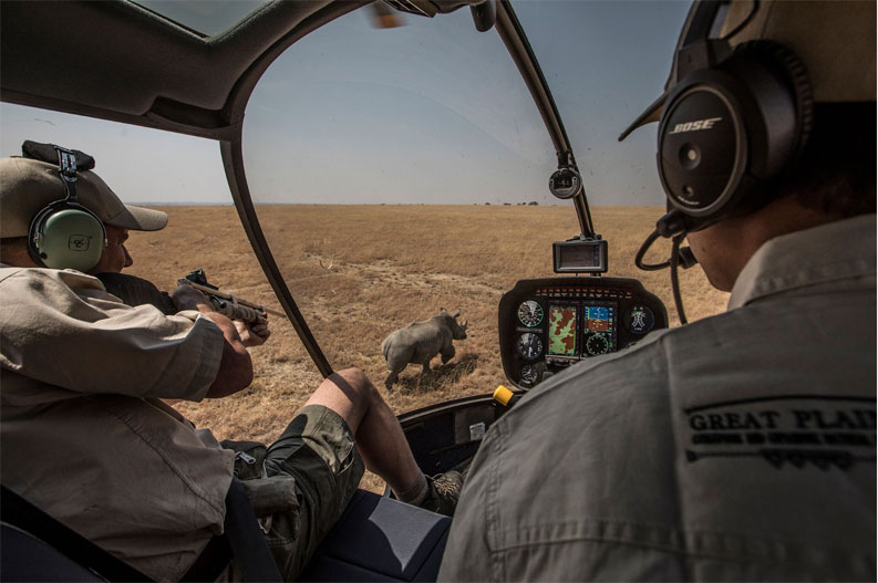 Rhino relocation: Heliicopter shot - A veterinarian fires an opioid tranquillizer dart at a rhino chosen to be on the first convoy, South Africa ©Jason Florio