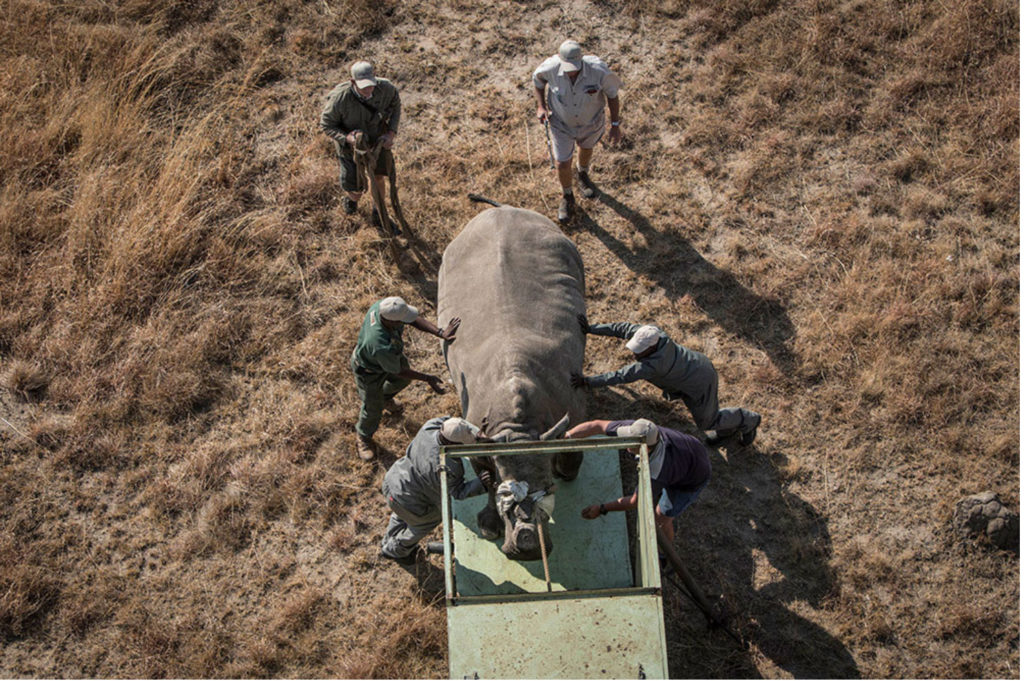 Rhino Relocation by Jason Florio - Dodho Magazine - Free State, South Africa. Photos of the mass relocation of rhino's, South Africa