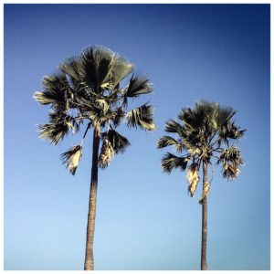 'Two Palm Trees' Gambia © Helen Jones-Florio color