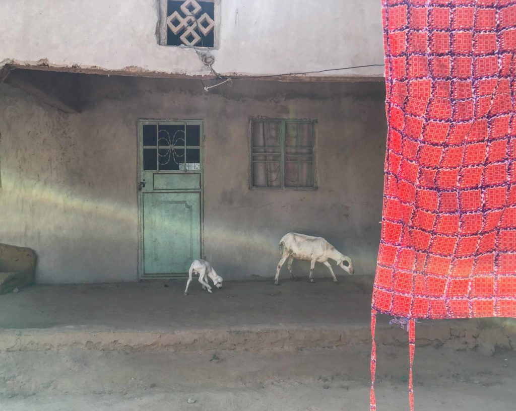 Gambia Doors - tourquoise door and goats in a compound, The Gambia, West Africa. Image ©Helen Jones-Florio
